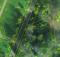 Wenn noch kein Baumkataster vorliegt, bietet sich die Erstellung mit einem Grünflächenkataster an. Die geometrischen Grundlagen zu beiden werden stereoskopisch aus Luftbildern erfasst und vor Ort geprüft und ergänzt. Hier am Beispiel des Stadtgartens von Emmendingen. Foto: Hansa Luftbild AG